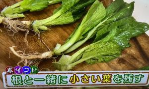 まちかど情報室 おはよう日本 大橋明子 再生栽培